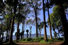 Bosque de Rasamala alrededor de las primaveras de Citarum Foto de archivo libre de regalías