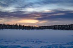 Bosque de Rovaniemi Foto de archivo libre de regalías