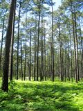 Bosque de Sam Houston National imagen de archivo libre de regalías
