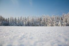 Bosque de Snovy Imagen de archivo libre de regalías