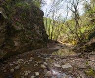 Bosque de Spribg Fotografía de archivo