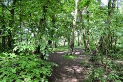 Bosque de Storeton Fotografía de archivo