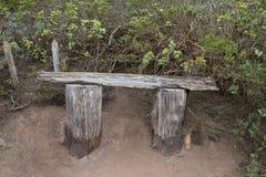 Bosque De Strzępiący się Jorge park narodowy Zdjęcia Royalty Free