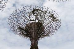Bosque de Supertree Foto de Stock Royalty Free