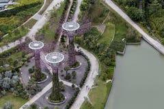 Bosque de Supertree em jardins pela baía em Singapura imagens de stock