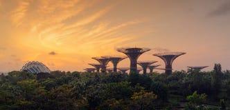 Bosque de Supertree Jardine pela baía na área de Marina Bay no nascer do sol imagens de stock
