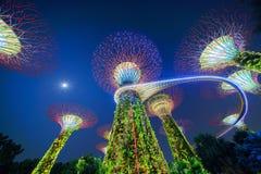 Bosque de Supertree Jardine pela baía na área de Marina Bay na noite imagens de stock royalty free