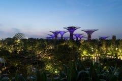 Bosque de Supertree Jardine pela baía na área de Marina Bay na noite, fotografia de stock royalty free