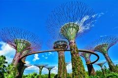 Bosque de Supertree, jardins pela baía, Singapura Foto de Stock Royalty Free