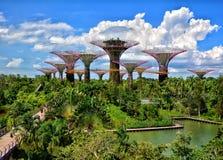 Bosque de Supertree, jardins pela baía, Singapura fotos de stock