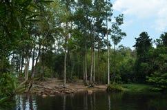 Bosque de Tailandia Foto de archivo libre de regalías