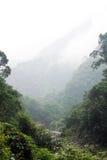 Bosque de Taiwán con niebla Fotografía de archivo libre de regalías
