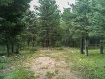 Bosque de Tanglewood Imagens de Stock Royalty Free
