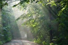 Bosque de tierra de la travesía de camino con los haces de luz Foto de archivo