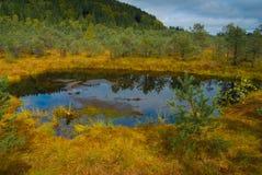 Bosque de Tinovul Mohos Foto de archivo libre de regalías