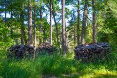 Bosque de Valaam Fotos de archivo libres de regalías