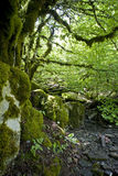 Bosque de Virgen foto de archivo libre de regalías