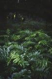 Bosque de Virgen Fotografía de archivo libre de regalías