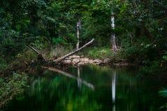 Bosque de Virgen de Cuba fotografía de archivo libre de regalías