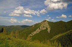 Bosque de Virgen en las montañas Fotografía de archivo