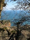 Bosque de Watcombe foto de archivo