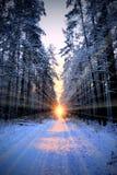 Bosque de Wnter fotografía de archivo libre de regalías