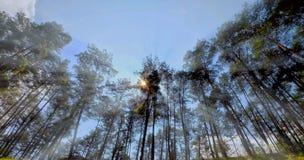 Bosque de Yen Minh, Yen Minh, Ha Giang, Vietnam foto de archivo