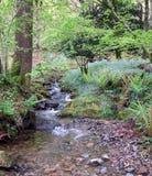 Bosque 1 de Yewdale Fotos de archivo libres de regalías
