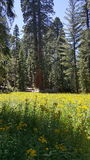Bosque de Yosemite Fotos de Stock