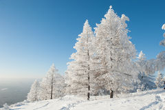 Bosque debajo de nevadas fuertes imágenes de archivo libres de regalías