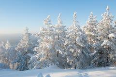 Bosque debajo de nevadas fuertes fotos de archivo