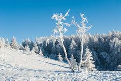 Bosque debajo de nevadas fuertes imagen de archivo