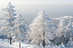 Bosque debajo de nevadas fuertes imagen de archivo libre de regalías