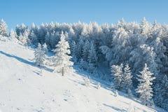 Bosque debajo de nevadas fuertes foto de archivo libre de regalías