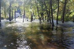 Bosque debajo del agua Fotografía de archivo libre de regalías