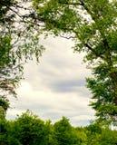 Bosque del árbol imágenes de archivo libres de regalías