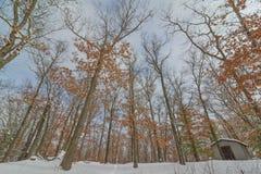 Bosque del árbol de hoja caduca en el invierno cerca del gobernador Knowles State Forest en Wisconsin septentrional - tierra que  foto de archivo libre de regalías