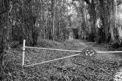 Bosque del árbol de olmo Fotografía de archivo