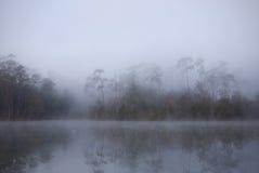 Bosque del árbol de pino de la cubierta de la niebla de la mañana Imagenes de archivo