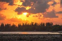Bosque del árbol de pino en la playa con el fondo de la puesta del sol Imagen de archivo