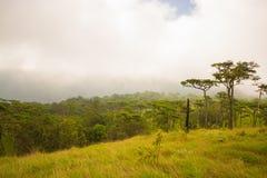 Bosque del árbol de pino en la provincia de Uttaradit del parque nacional de Phu Soi Dao Foto de archivo libre de regalías