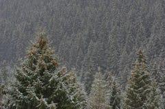 Bosque 2 del árbol de pino del invierno de las montañas Fotos de archivo libres de regalías