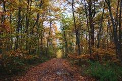 Bosque del árbol de roble Fotos de archivo libres de regalías