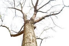 Bosque del árbol del invierno Fotografía de archivo