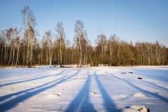 Bosque del abedul en invierno Fotos de archivo libres de regalías