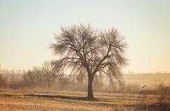 Bosque del abedul en luz del sol Fotos de archivo