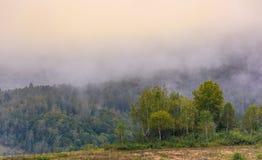 Bosque del abedul en mañana de niebla Fotos de archivo