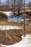Bosque del abedul en primavera temprana Bosque temprano del resorte Imágenes de archivo libres de regalías