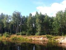 Bosque del abedul por el lago Fotografía de archivo libre de regalías