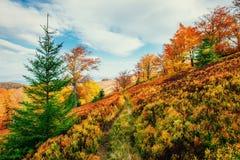 bosque del abedul por tarde soleada mientras que estación del otoño imagenes de archivo